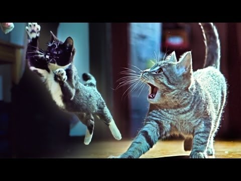 "Kittens On The Beat, A Music Video by Corridor Digital Featuring the Song ""Wildstyle"" by Savant"