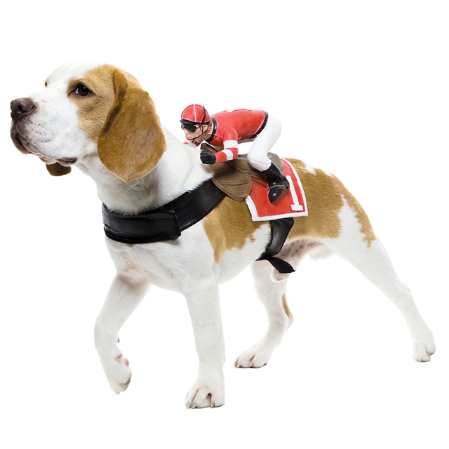 Dog Riders Jockey Costume  sc 1 st  Laughing Squid & Humorous Dog Costumes That Look Like Things are Riding on Its Back