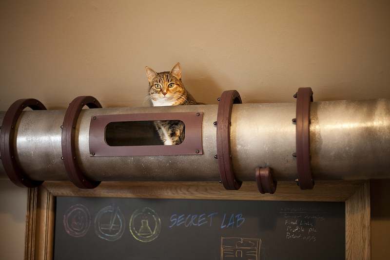 Cat Transit System, A Custom Cat Mobility Tube by Because We Can