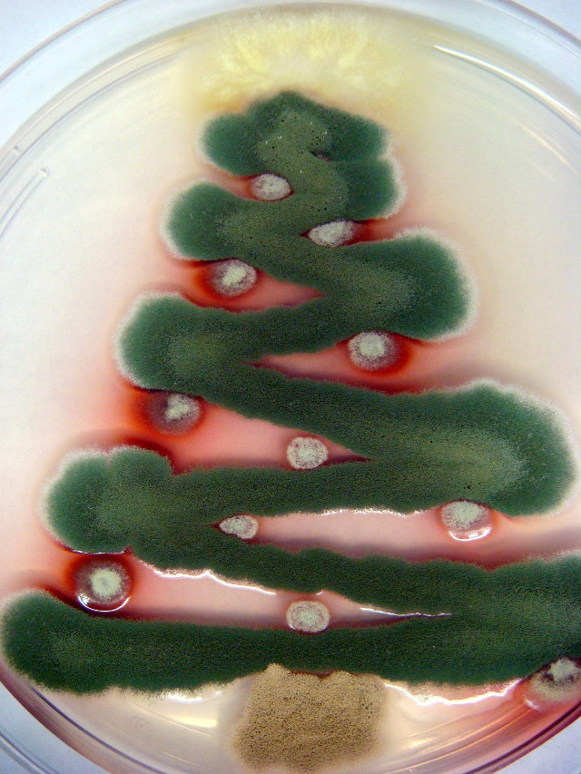 Fungal Christmas Tree