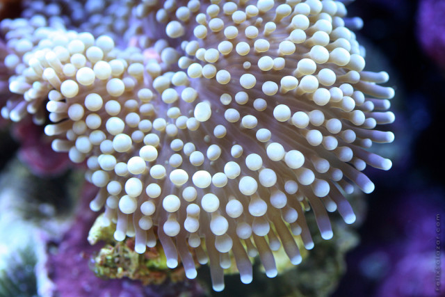 Macro reef marine life photography by Felix Salazar