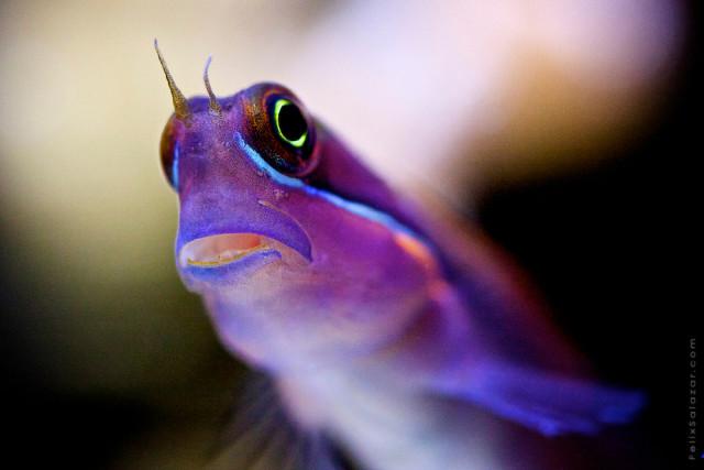 Macro reef marine life photography by Felix Salazar