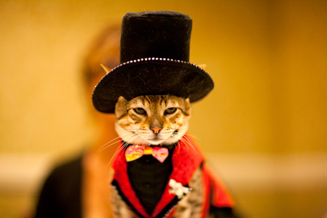 Cat in a top hat