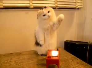 Cat Theremin