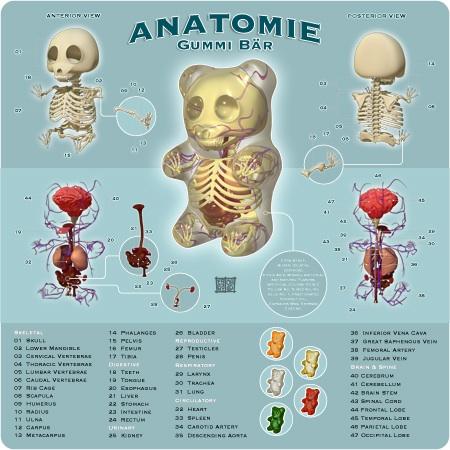 The Anatomy of a Gummy Bear by Jason Freeny