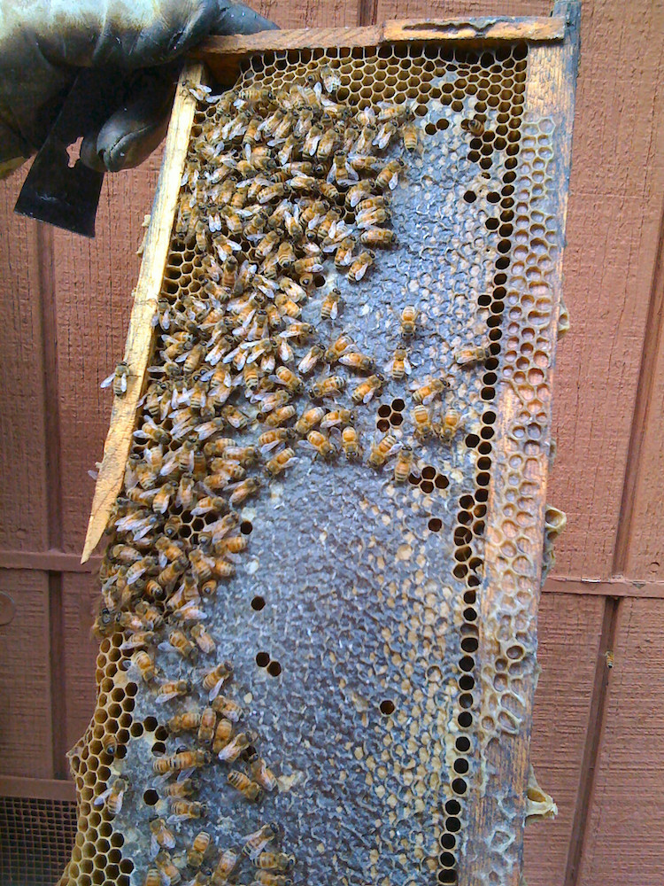 Get Bees Helps You Setup Your Own Beehive