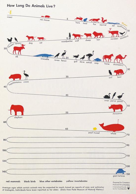 Animal Lifespan