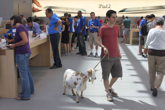 Mark Malkoff Brings Goat to Apple Store