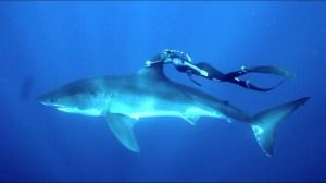 Woman Holds Onto Sharks Dorsal Fin