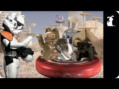 Paw Warz, A 'Star Wars' Parody Starring Adorable Kittens