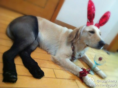 Pantyhose Dog