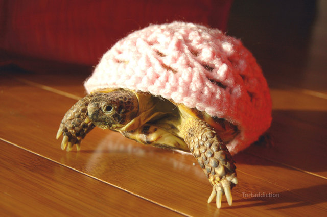 Turtle Sweater