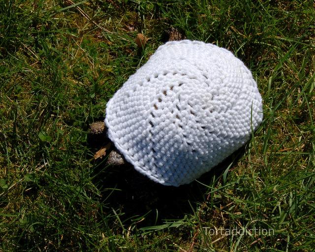 Crocheted Tortoise Turtle Cozies