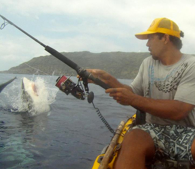 Chompy the shark gives hawaiian kayak fisherman quite a scare for Kayak fishing hawaii