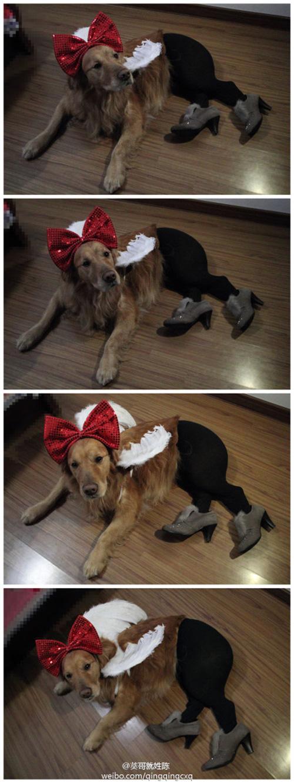 Pantyhose Dog