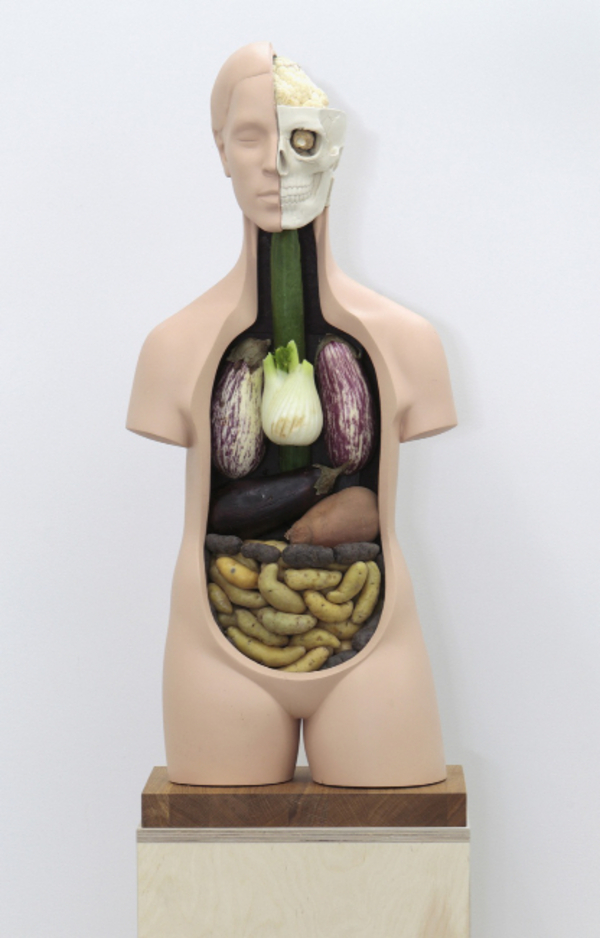 Veggieanatomy by Klaus Weber