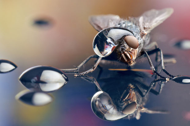 Macro Photos of Insects with Water Droplets on Their Heads