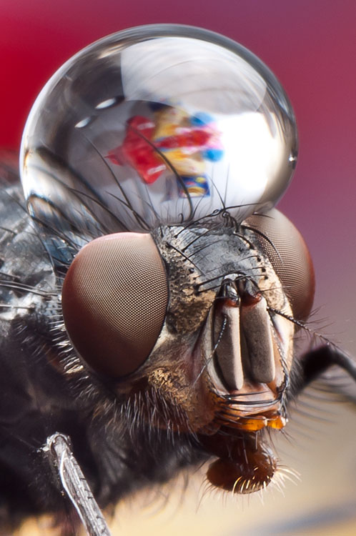Macro photos of insects with water droplets