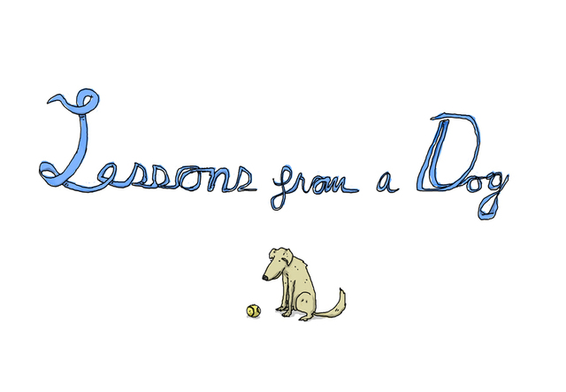 Lessons From a Dog