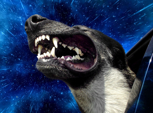 Warp Dogs, Dogs Hanging Out of Car Windows Traveling Through Outer Space at Warp Speed