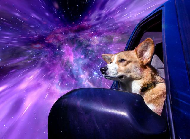 Warp Dogs