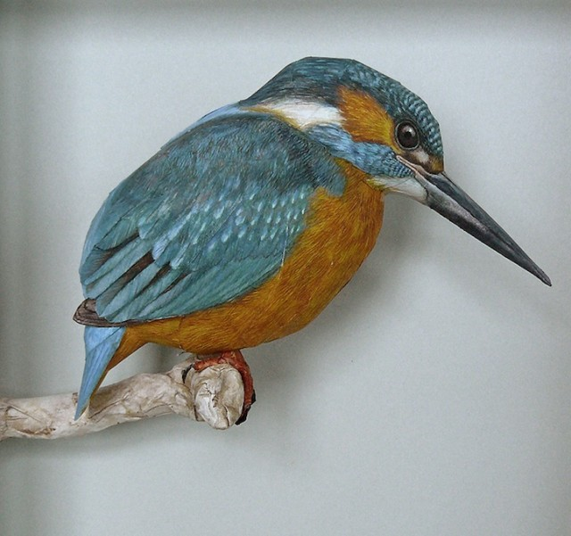 Lifelike papercraft bird models by Johan Scherft