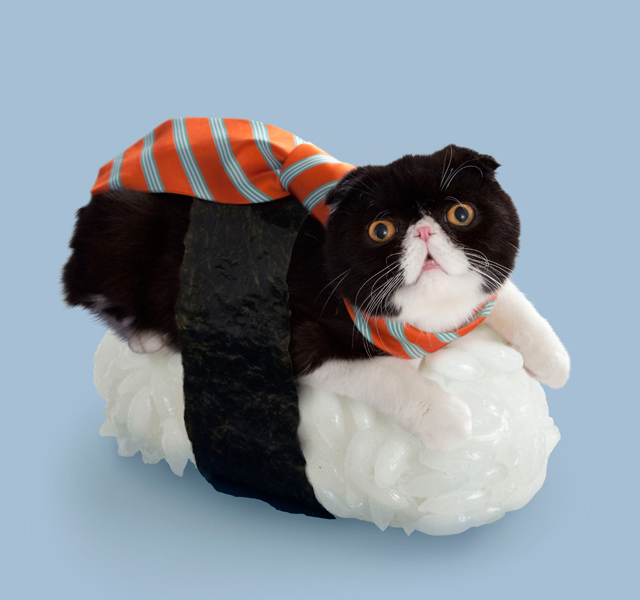 Sushi Cat Shakebu
