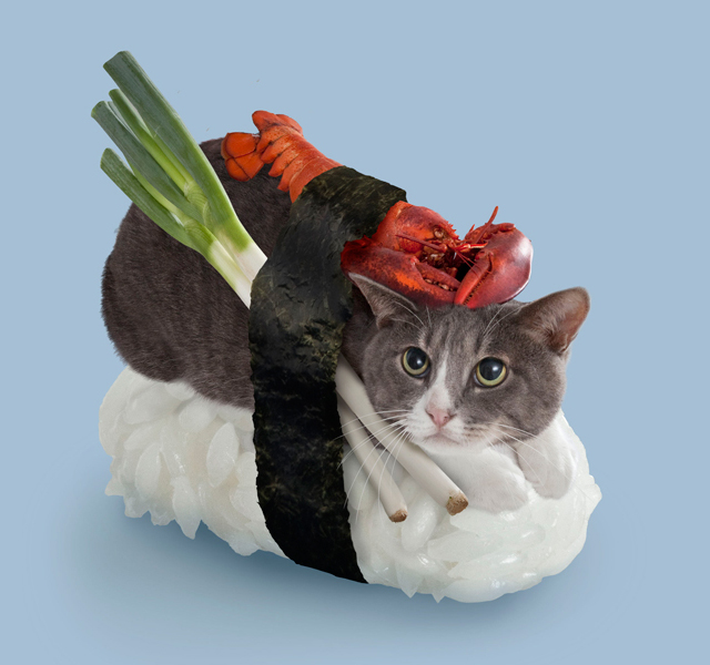 Japan's Sushi Cats