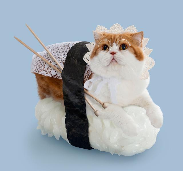 Sushi Cat Maggie