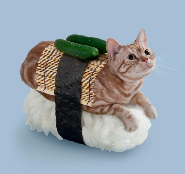 Sushi Cat Wasabi