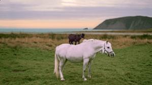 Goat Riding a Horse