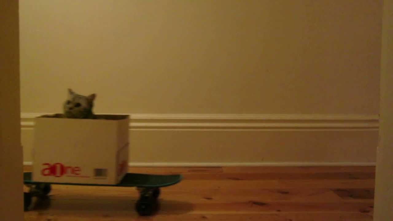 Cat Boarding, A Cat in a Box on a Skateboard Drifting Down a Hall