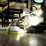 Cat Rings a Desk Bell So Its Human Minions Fetch It Treats