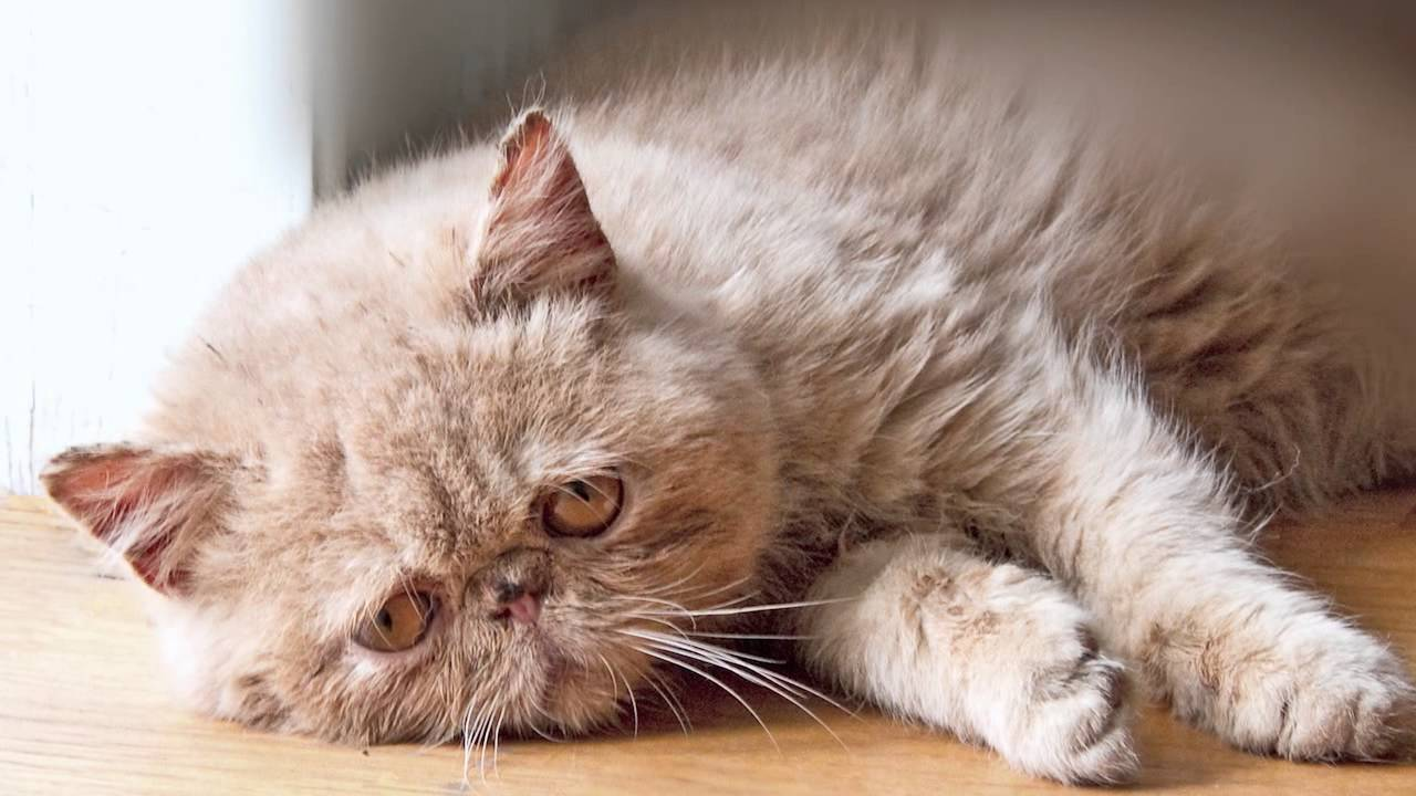 Depressed Felines Reflect on Their Miserable Lives in Ze Frank's 'Sad Cat Diary'