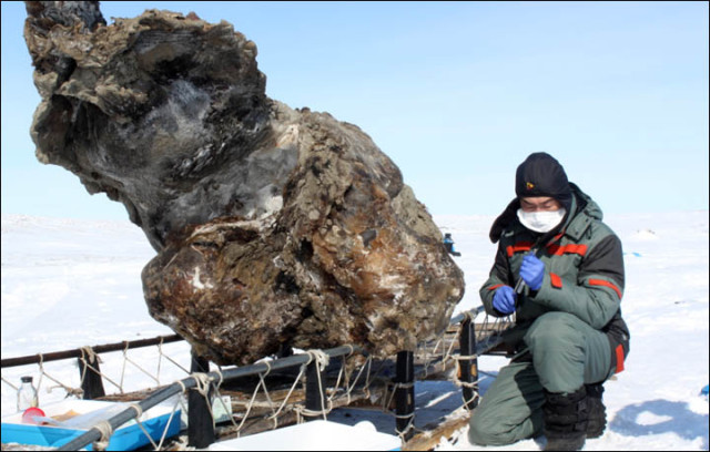 Scientists recover woolly mammoth blood