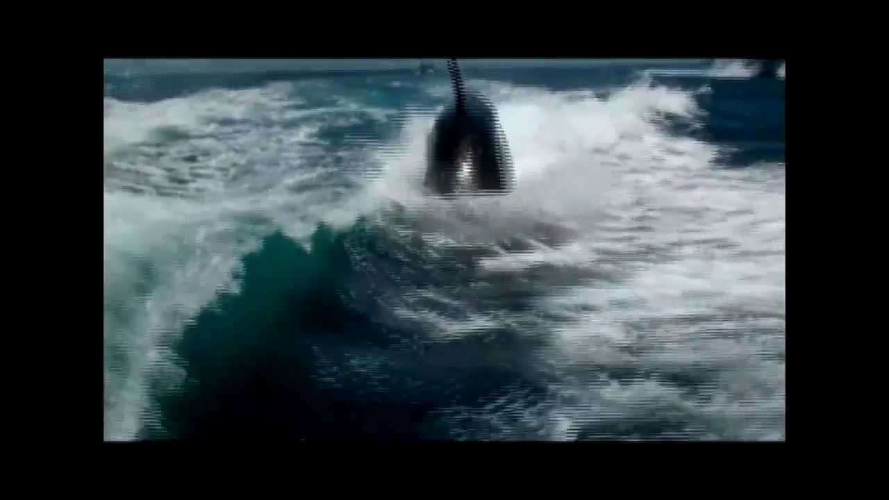 Killer Whales Play in the Wake of a Vacationing Couple's Boat