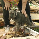 Oklahoma Tornado Survivor Finds Her Dog Buried Alive in Rubble During Television Interview