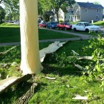 Lightning Blasts Bark off Tree