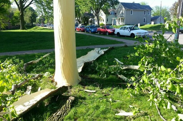 Lightning Blasts Bark off Tree