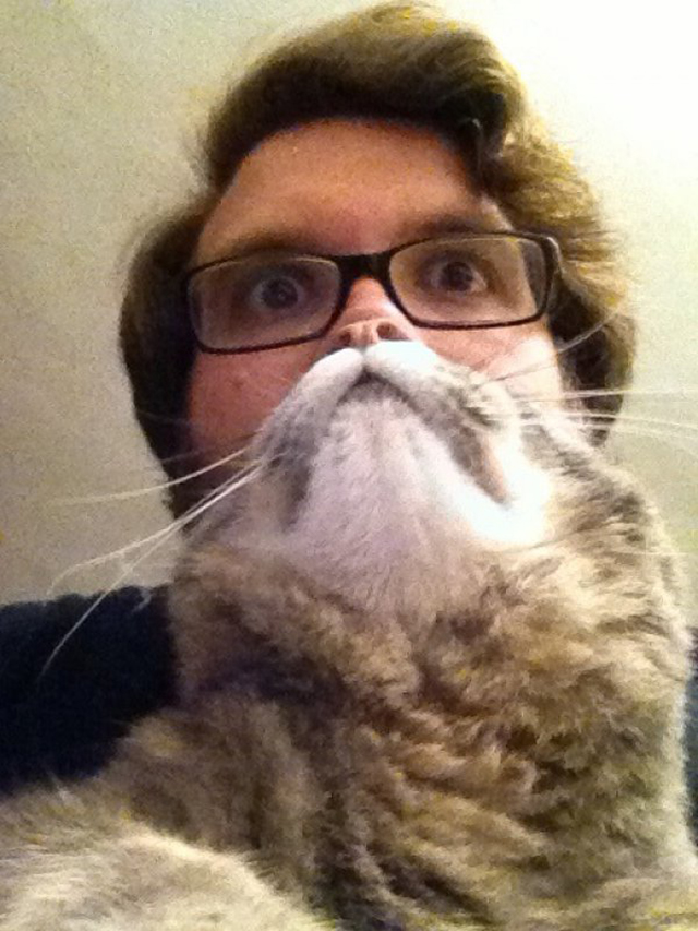 cat beards a photo meme where people place a cat in front of their
