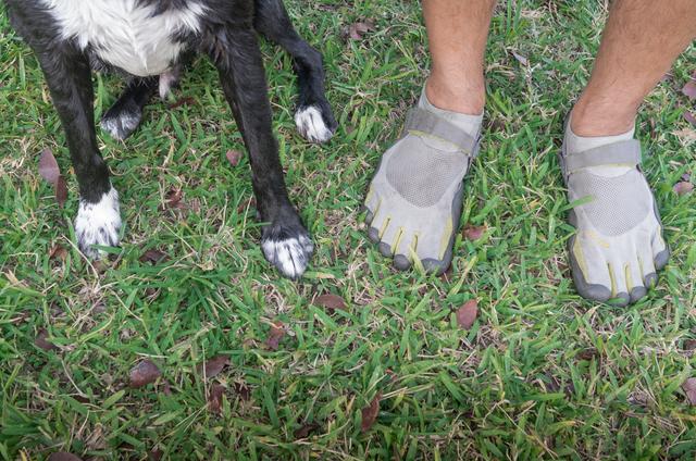 Feet & Paws