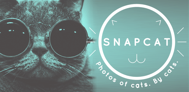 Snapcat, An App That Lets Cats Take Selfies By Pawing the Screen
