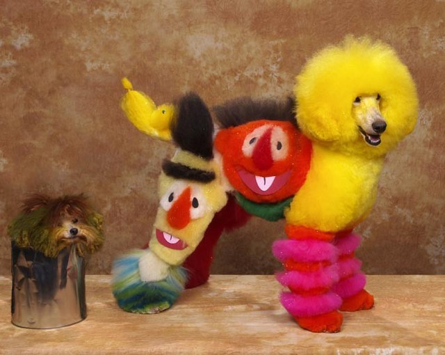 Creative Dog Grooming
