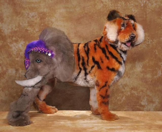 Dogs Outlandishly Dyed And Groomed To Look Like Fictional