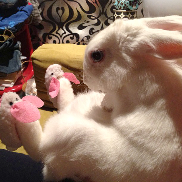 Bunny In Bunny Slippers