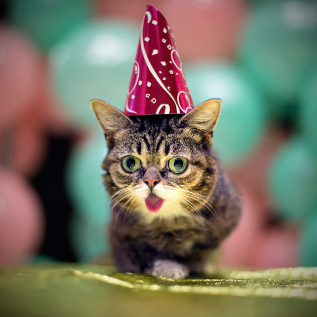 Internet Famous Cat Lil BUB Getting Her Own Revision3 Show