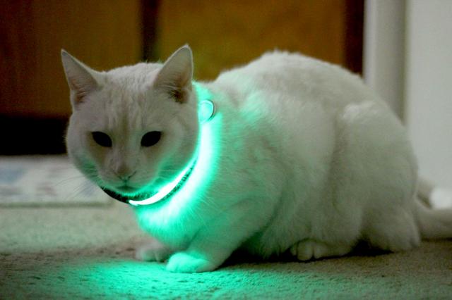 HALO MINI Kitty