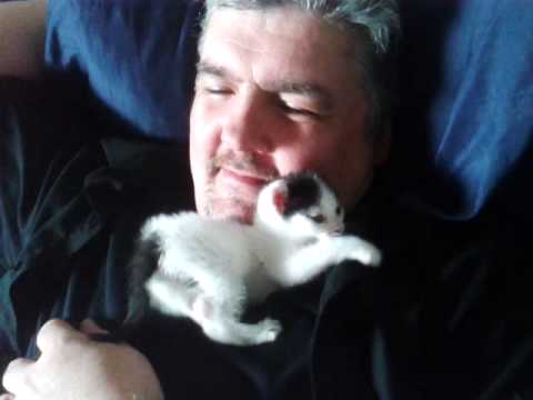 Gracie the Kitten Snuggles With Her Owner's Beard