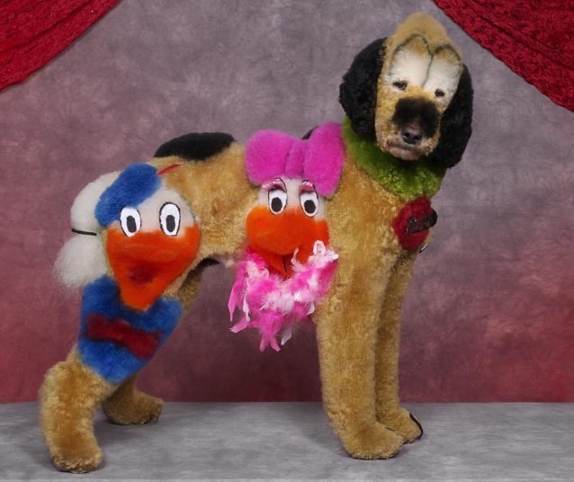 Daffy Dog Grooming