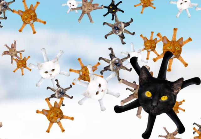 Catflakes